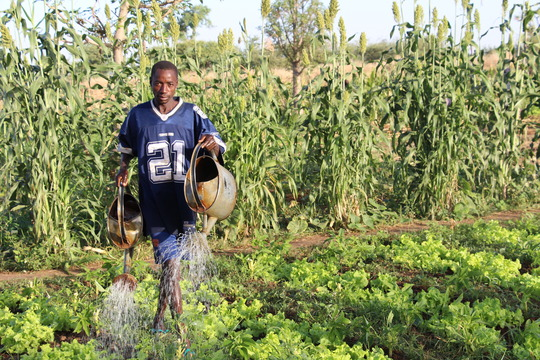 Farming crops with rainwater catchment basin