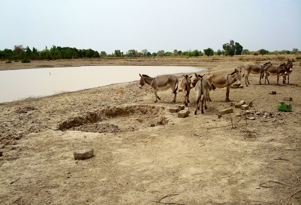 Rainwater Catchments: A Solution to Water Scarcity
