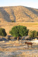 Bedouin family's home near Al Aqaba