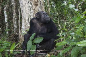 Tiki, finally on Tchibebe Island