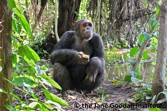 Kefan on Tchibebe Island