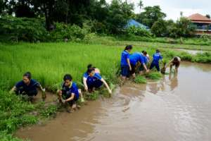 Students Helping Clean Rice Saplings