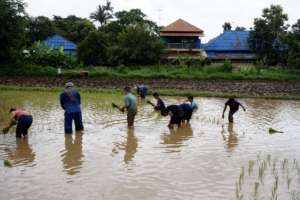 Students Planting the Rice