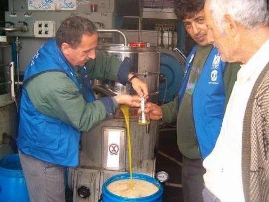 Technical Oversight for Quality Olive Oil