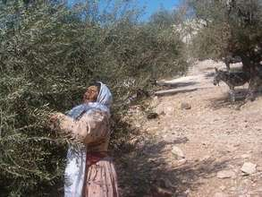 Sustainable Practices by West Bank Women Farmers