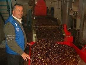 Best Practices for Pressing Olives