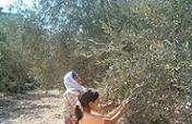 Economic Help for Palestinian Women Farmers
