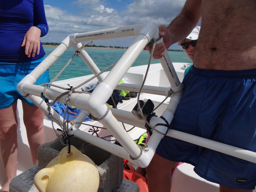 A Baited Remote Underwater Video (BRUV) system