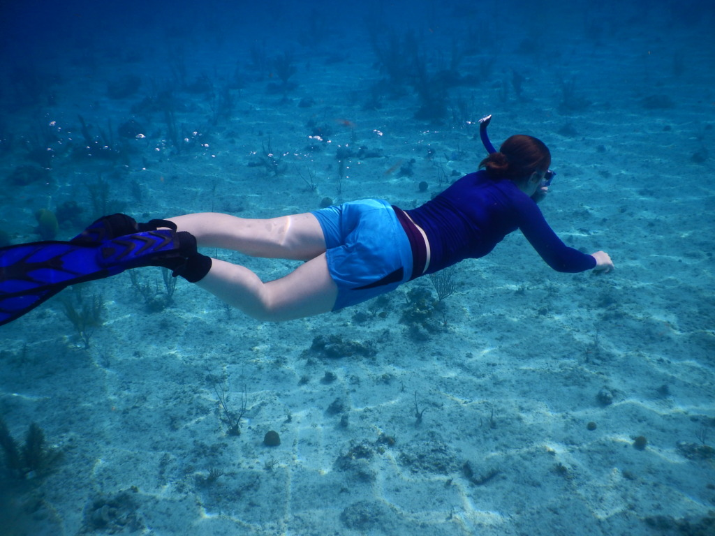 Surveying the sea floor of turtle habitat