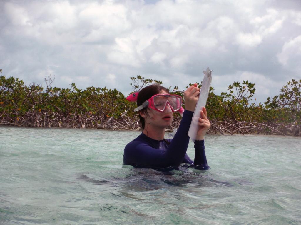 A volunteer records habitat data in the mangroves