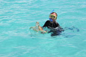 Student catching a green sea turtle.