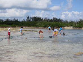 Students survey mangrove creeks in the Bahamas.