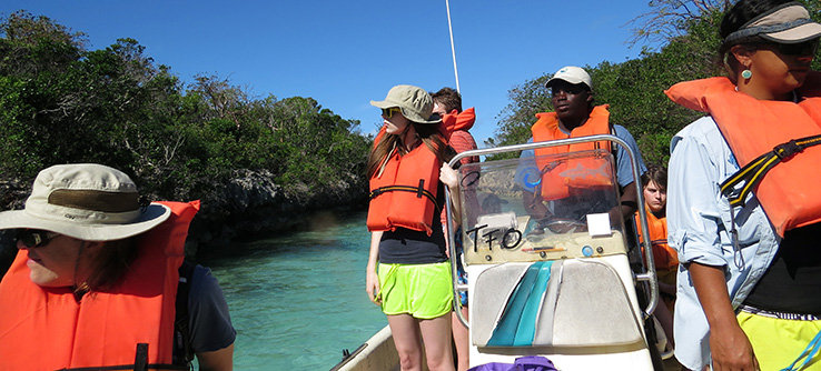 Surveying for turtles in mangroves