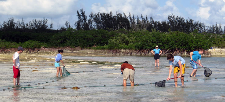Seine netting for turtles at the creek mouth