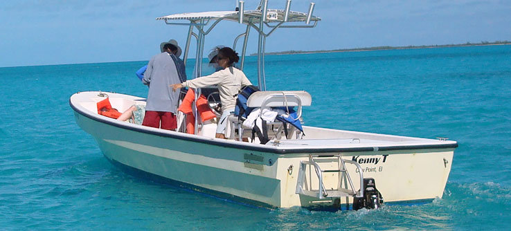 Dr. Brooks points out a sea turtle