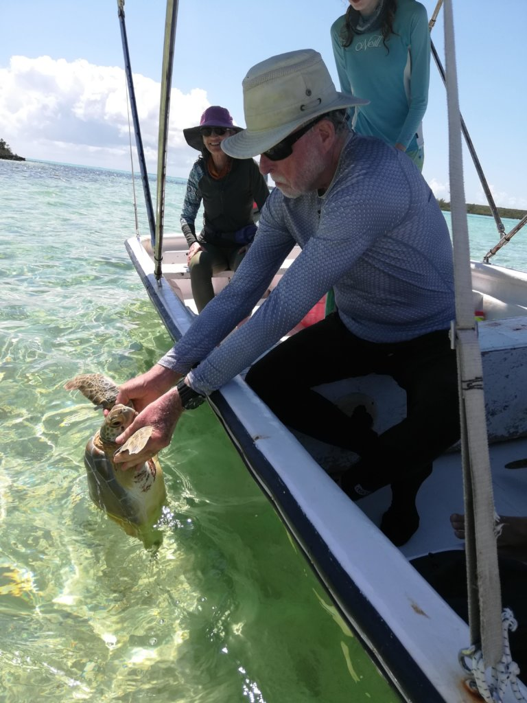Each turtle is returned to its capture location