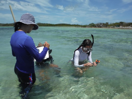 Teen volunteers record seagrass bed data
