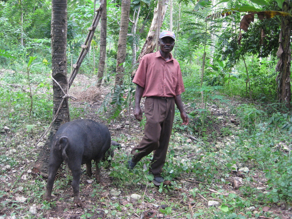 Proud Haitian pig owner