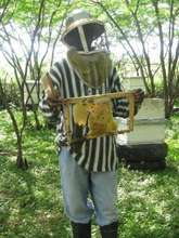 Honey harvesting demonstration