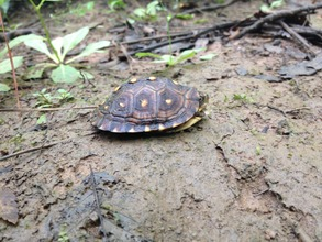 One of the juvenile turtles found this summer