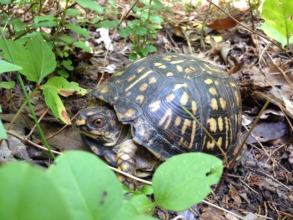 You found a turtle in the woods!