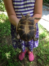 A New Turtle Trekker - why we need a ruler!