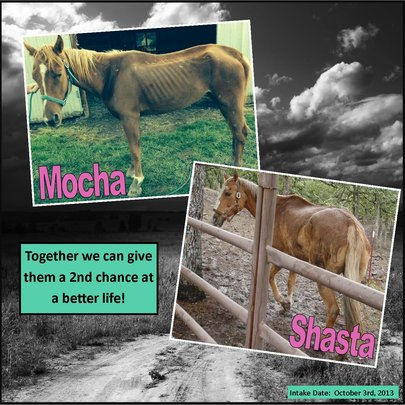 Lets Give Mocha & Shasta A Second Chance At Life