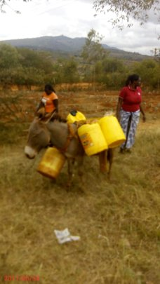 Donkeys currently used to fetch water.