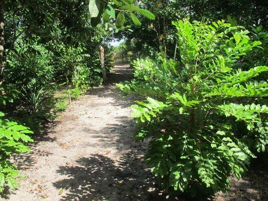 Caterpillar host trees decorate demonstration site