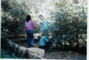 Joint olive harvest