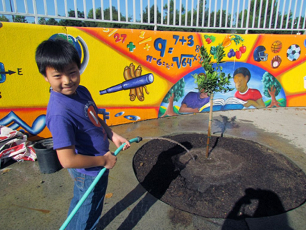 Child Watering a Newly Planted Tree