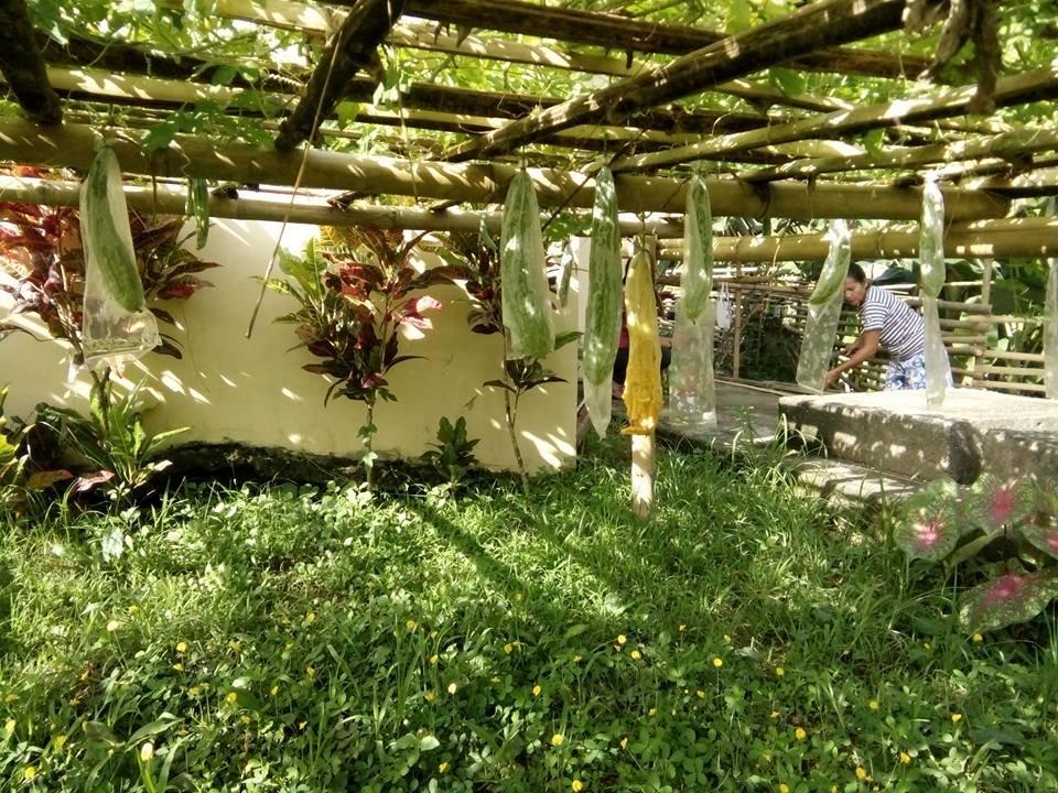 Amazing school garden, Angub Elementary, Capiz