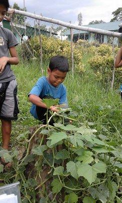 students harvest squash at school garden