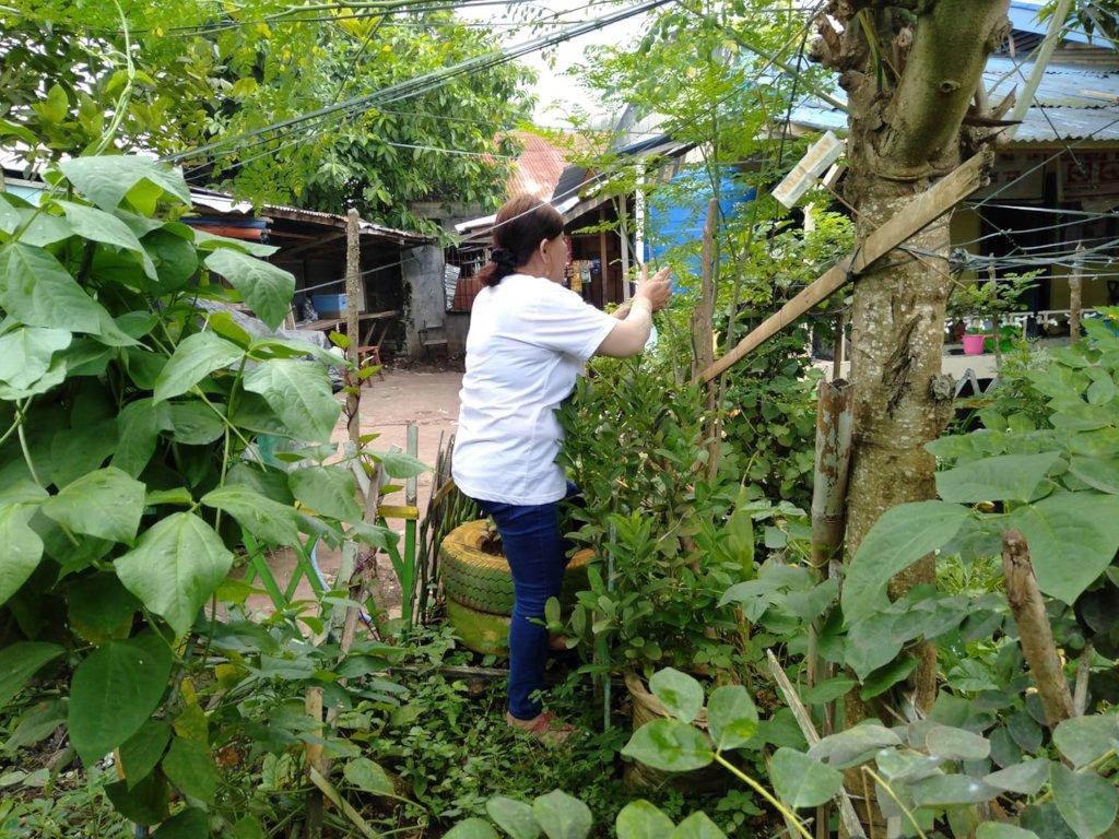 Garden in schoolyard of inner-city Salih Yusah ES