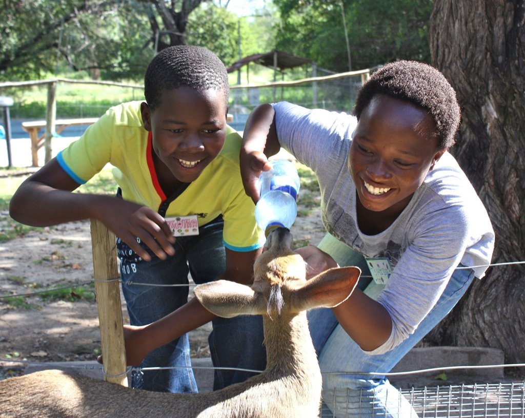 Feeding Maxi, the bushbuck