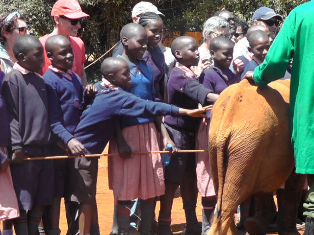 Baby elephants at the David Sheldrick orphanage