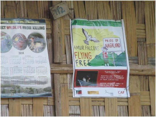 Awareness posters to protect the Pride of Nagaland