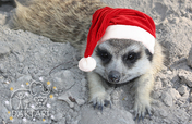 Christmas Gift - Special Animal Donation