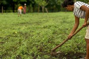 A Working Woman Cultivating Soil for her Crops