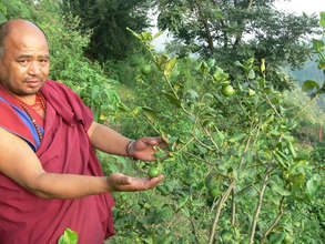 Lemon Trees planted for Vitamins