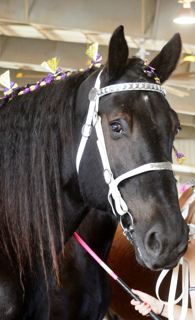 Surgery for Rescue Horse to Eliminate Chronic Pain