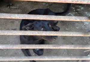 Deum when found, waiting next to be slaughtered