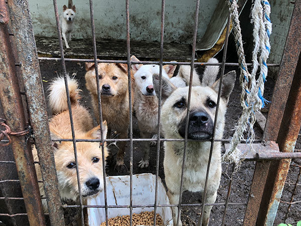 Some of the dogs in need of your help