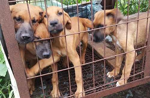 Urgent help is needed for these dogs