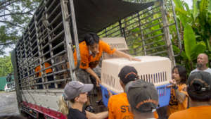 Rescued dogs from the meat trade arrive in Phuket