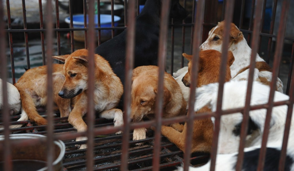 Dogs in a slaughterhouse in Hanoi, Vietnam