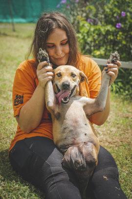 Soi Dog Foundation USA