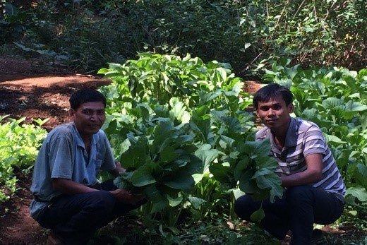 Vegetable farm of Channry