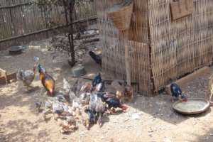 Chicken farm of Channry