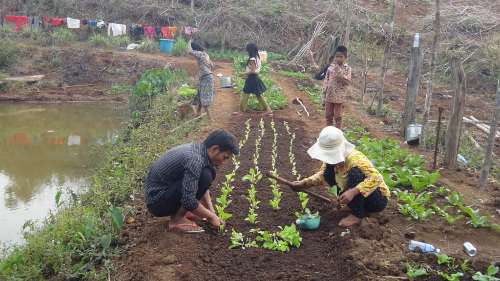 CRDT staff coaching farmer on vegetable growing